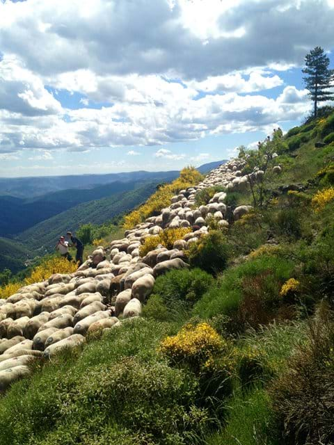 transhumance Gîte South of France walking wildlife holiday cevennes