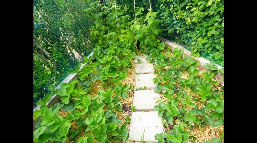 Strawberry and Rasberry garden
