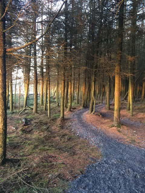 Trail through the trees, Archallagan plantation