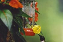 There are a number of bird-feeders that attract hummingbirds to the front deck.