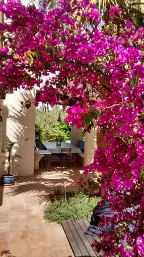 View through the bouganvillea to the dining area