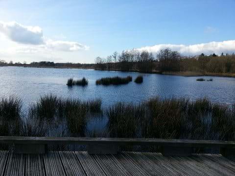 Explore the nearby Dwingelderveld national park