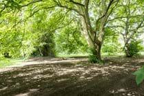 Two wonderful walnut trees in the garden