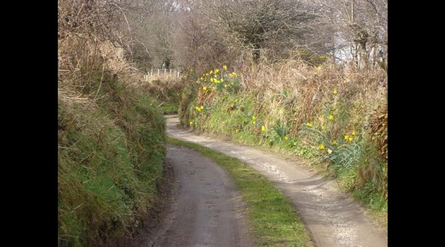 Halwin Lane, leading to Halwin Lane Farm