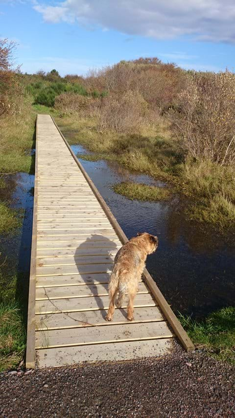 Ardersier Common boardwalks