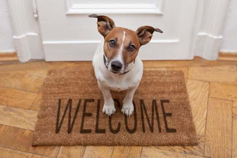 Dogs welcome with prior consent