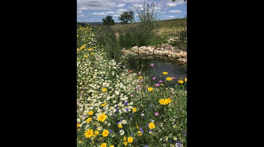 Wildlife pond and wild flowers