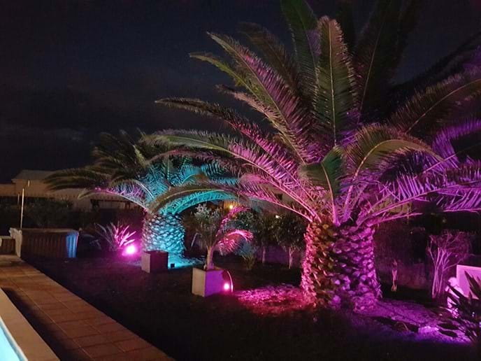 The garden comes alive at night with coloured & white uplighting