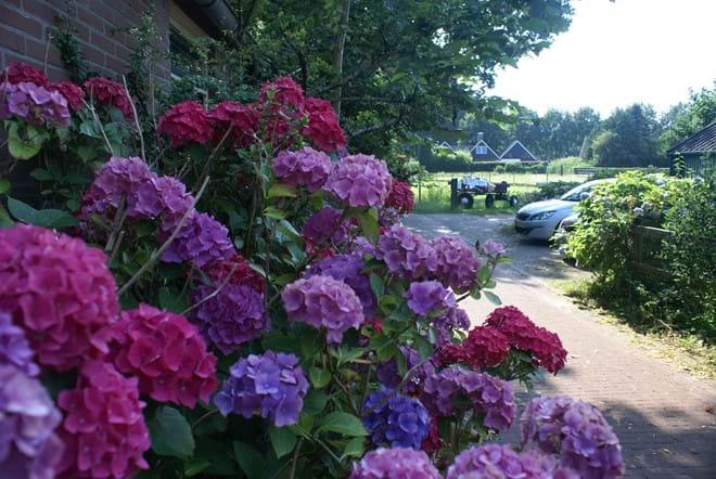 Flowers around the farmhouse