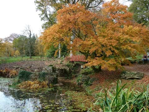 Acers in November, Batsford Arboretum