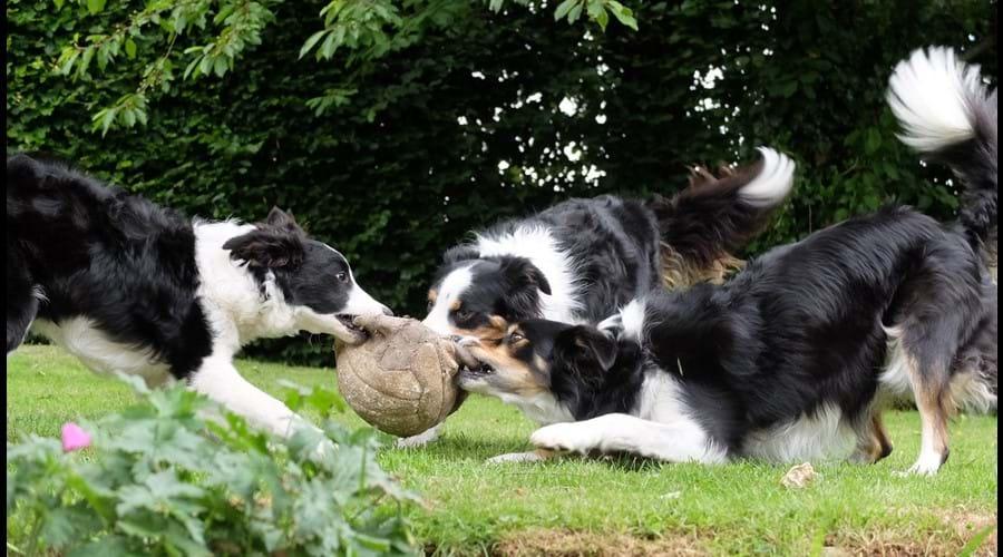 Football fun in back garden