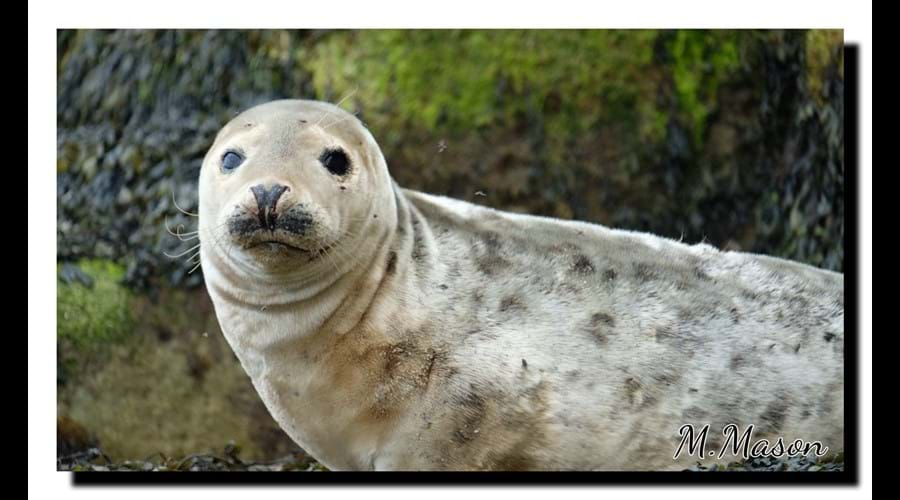 Young seal on Farne Islands
