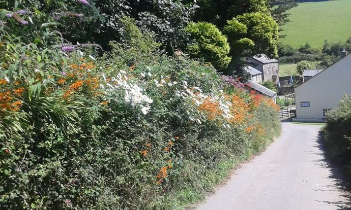Long private driveway down to Nutcombe Cottages with it's beautiful flowers