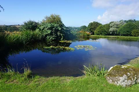 Watch the swallows and dragonflies swooping over the pond