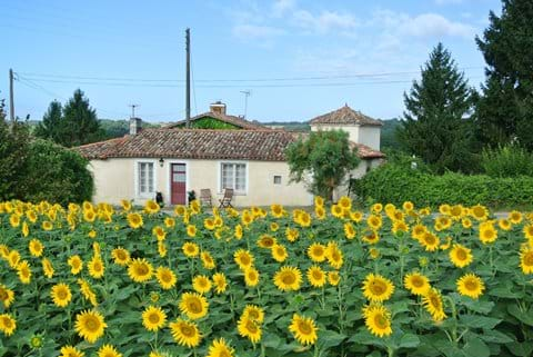 Gite La Fleurette surrounded by sunflowers (summer 2015)