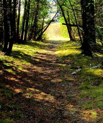 One of the many hidden trails that allow guests to wander through the woods near the cottage.