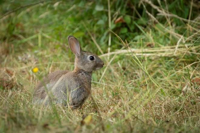 Rabbits in the Rectory Grounds