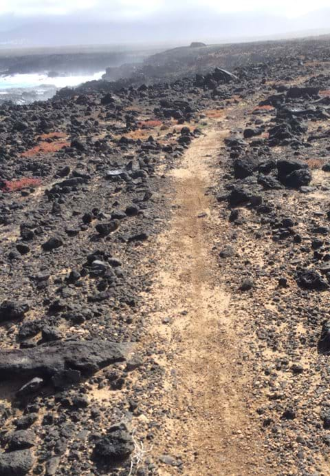 Coastal trail run through the lava rocks