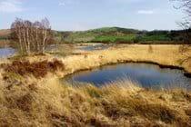 Cors Caron Nature Reserve