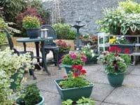 The walled garden in Summer