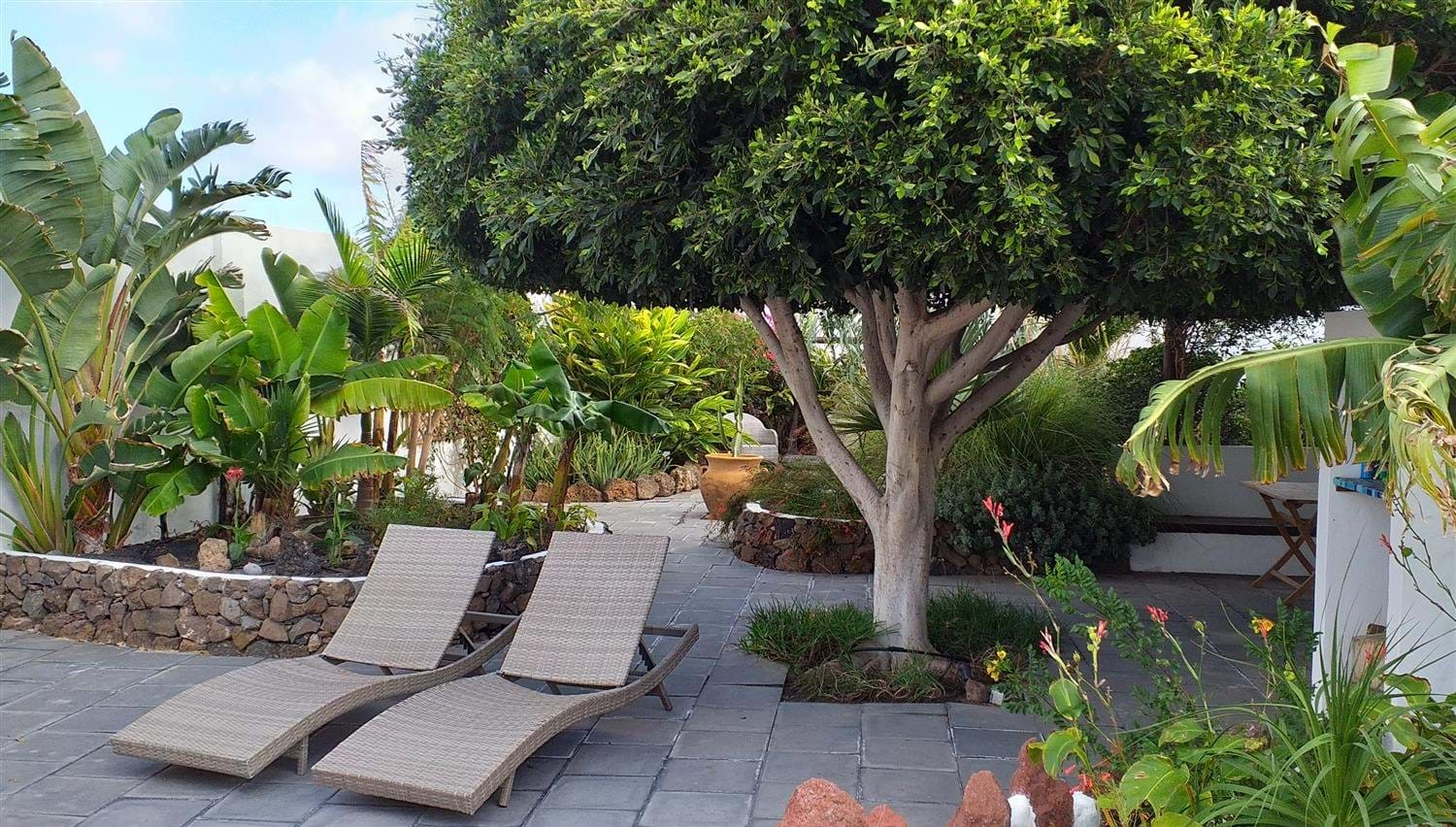 Sun loungers under a clipped Bay Tree at Finca Botanico in Lanzarote