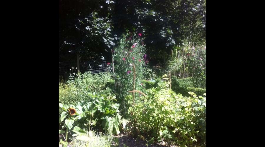 The 'Picking garden' at Eller How House.