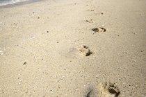 Deserted beaches, Bernera