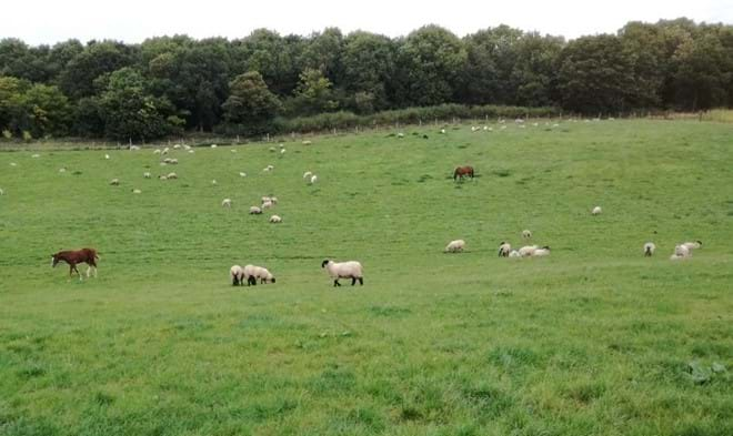 animals grazing in field at Stocken Hall Farm - Moo Cow Cottage