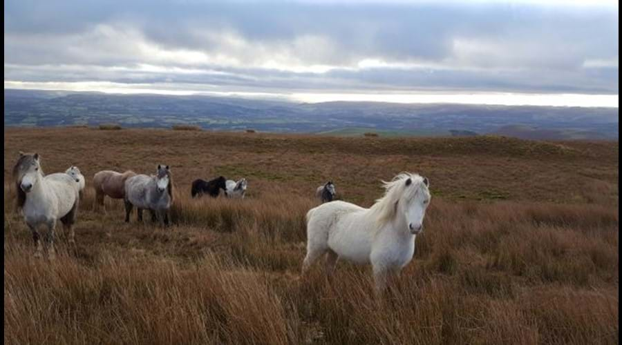 Wild horses can regularly be seen on the hills opposite the cottage