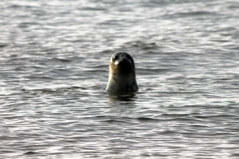followed the tide out at Saltfleet and look who came to greet us!