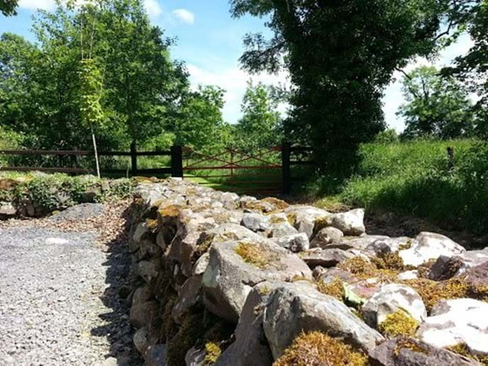 One of many dry stone walls dotting the farm.