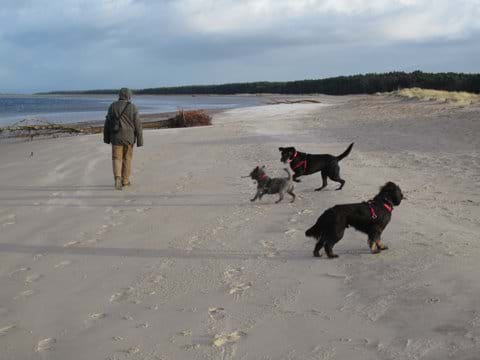This is Nairn beach, dogs are allowed on the beach all year round