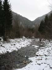 River Moll in winter