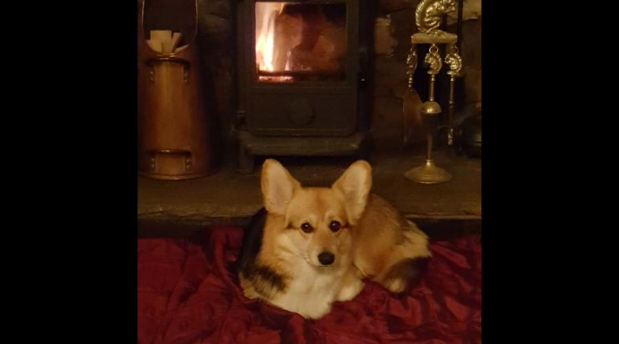 ....for everyone to enjoy cosy curl ups in front of the log burner.