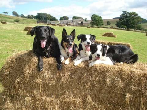 Playing on hay bales in the Dog Field, cottages behind