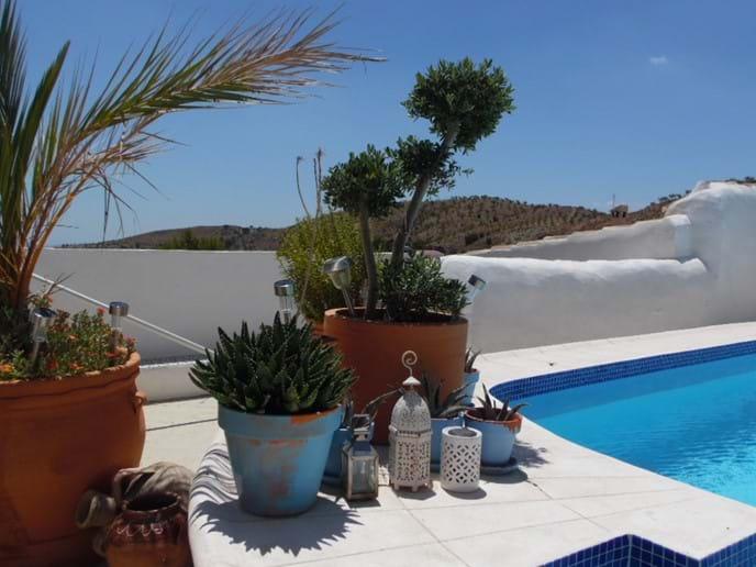 Terrace Plants.