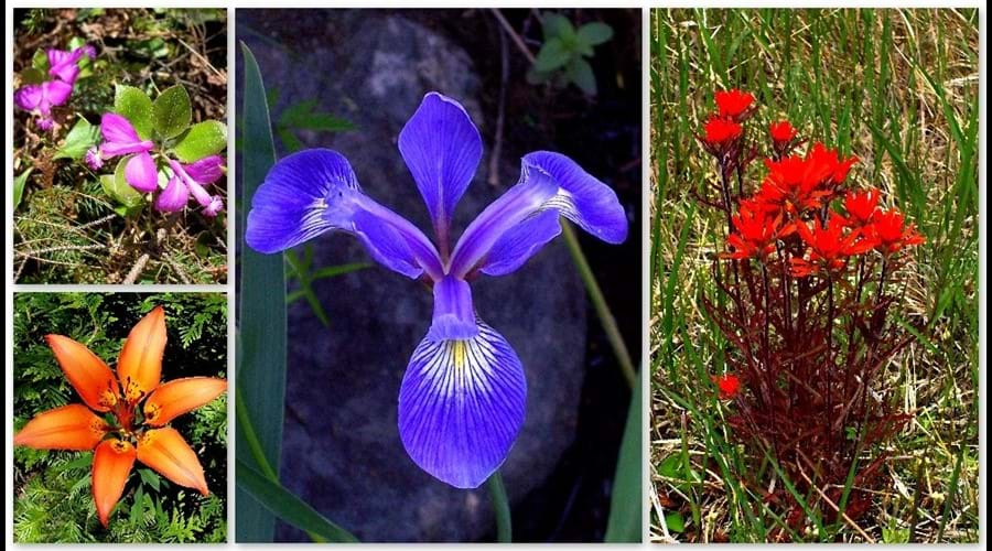 There are a wide variety of wild-flowers and something always seems to be in bloom at all times