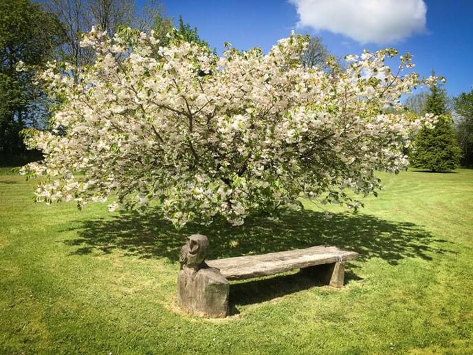 Our owl bench under a cherry tree in the middle of the garden