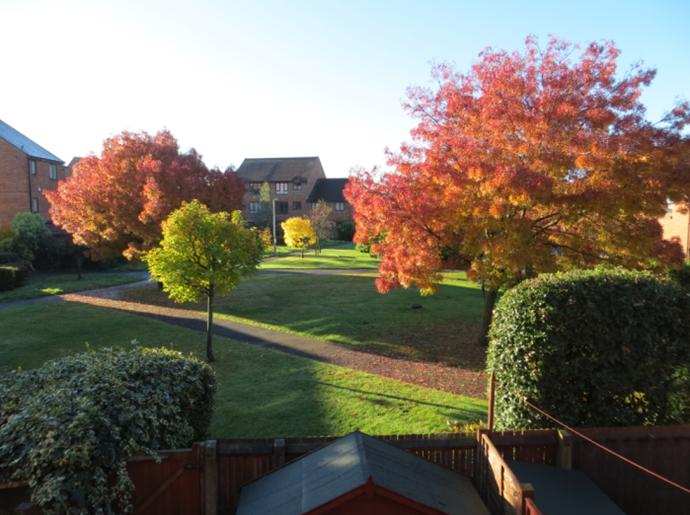 Rear View - Autumn