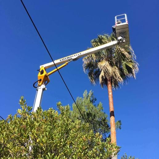 February 2017 - Pruning our massive Washingtonia Palm Trees - Seburga style!
