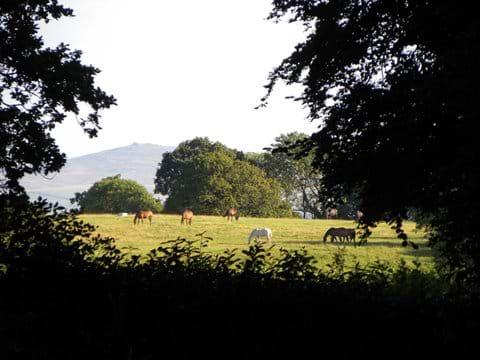 Looking towards Dartmoor from the owner
