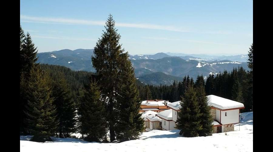 secluded pine forest setting at our group friendly ski accommodation