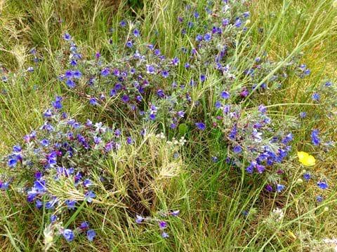 Wildlife holiday cevennes gite flora