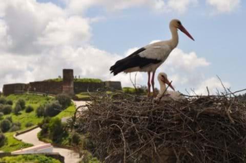 Birdwatching around the villa and Aljezur