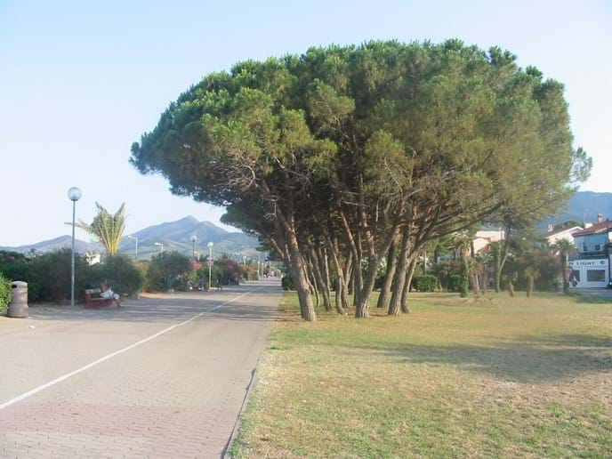 The pedestrian promenade next to the beach at Argeles sur Mer