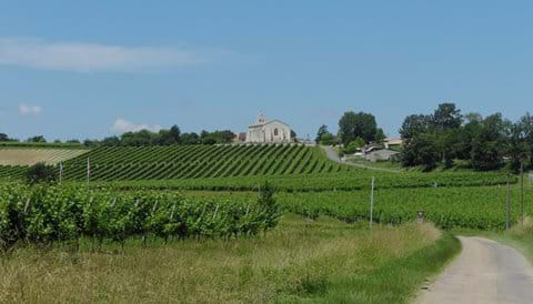 The church and vines in Margeuron
