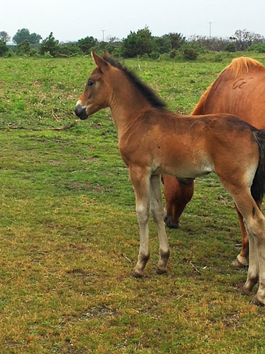 Springtime foals in the New Forest