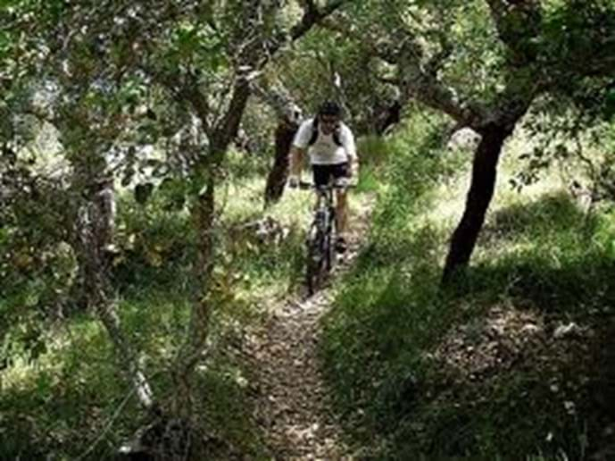 Cycling through cork oaks