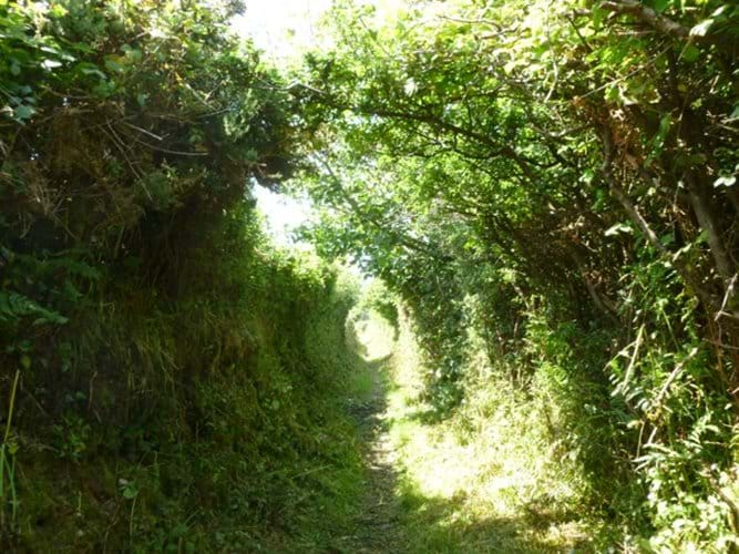Gorgeous Lanes Around St Agnes