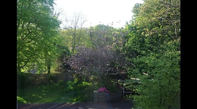 Bishop's Lodge beautiful spring view from the lounge
